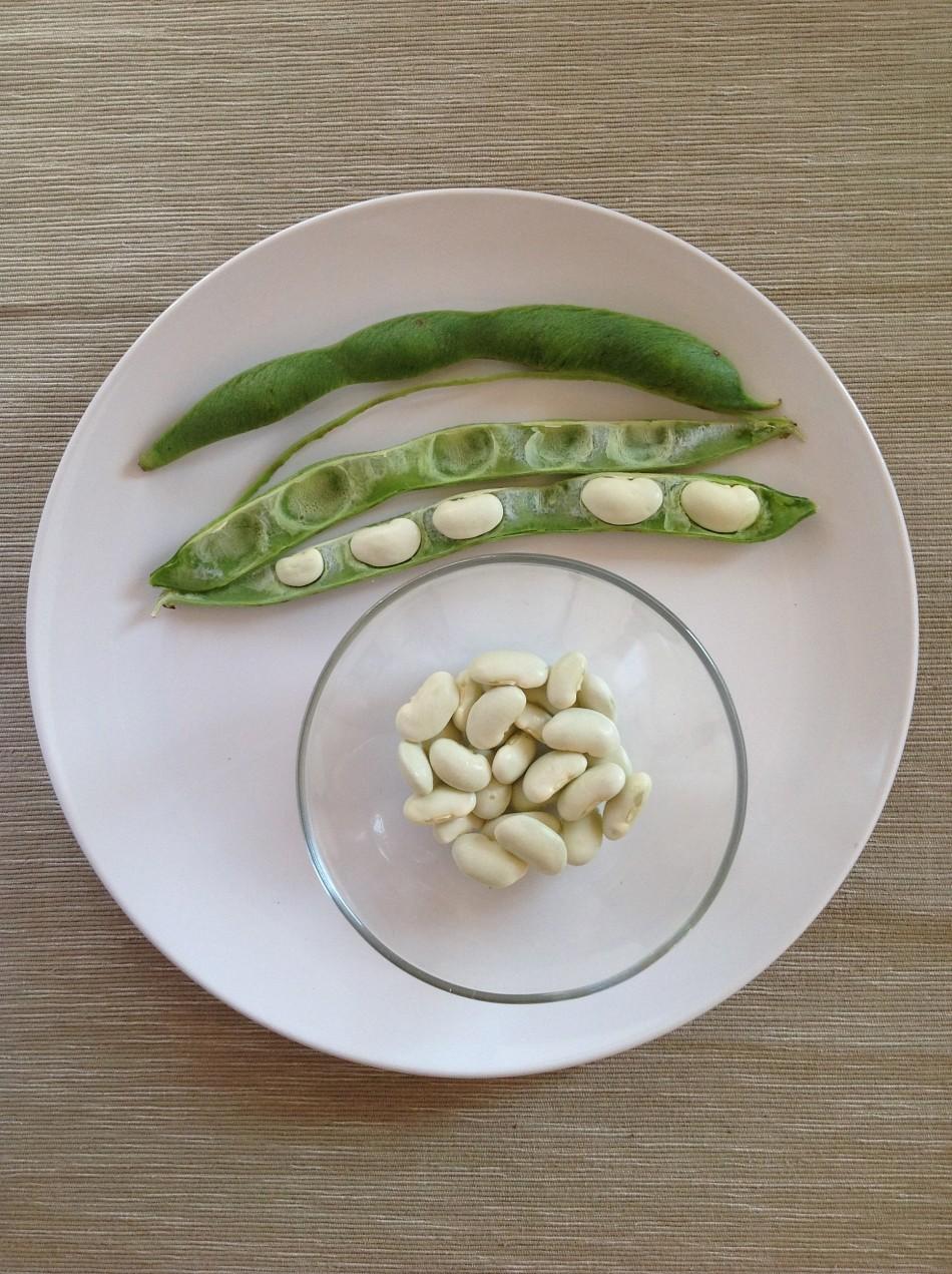 white embargo runner beans