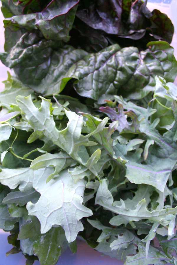 kale and swiss chard