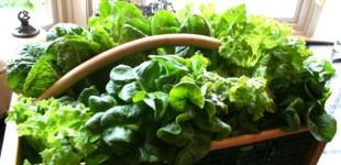 lettuce basket