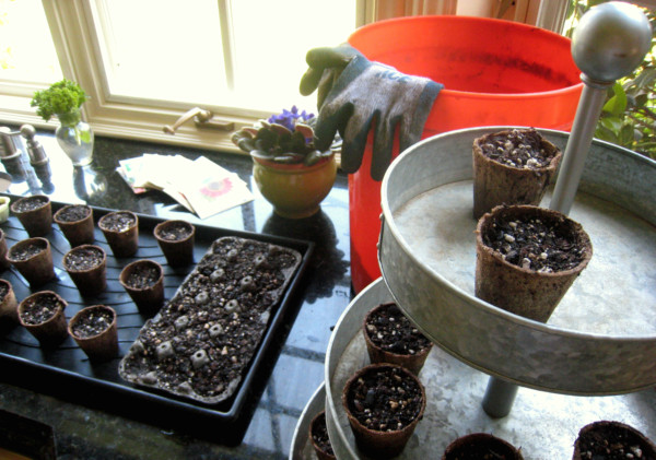 seedlings in kitchen